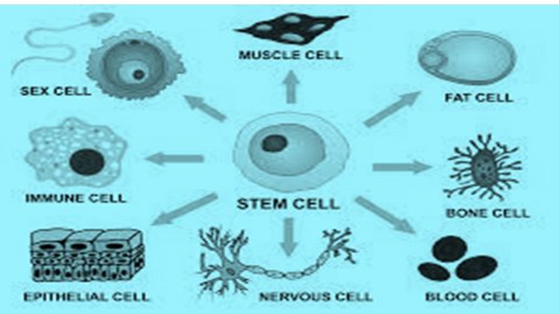 Intelligence of Human Cells Can Tell Us What Happens To the Body of a Human