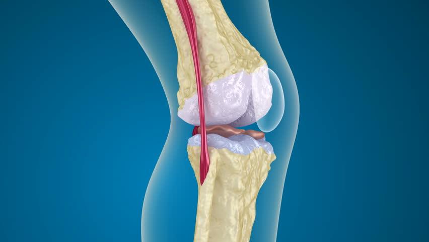 Calcium, Adolescent and Osteoporosis