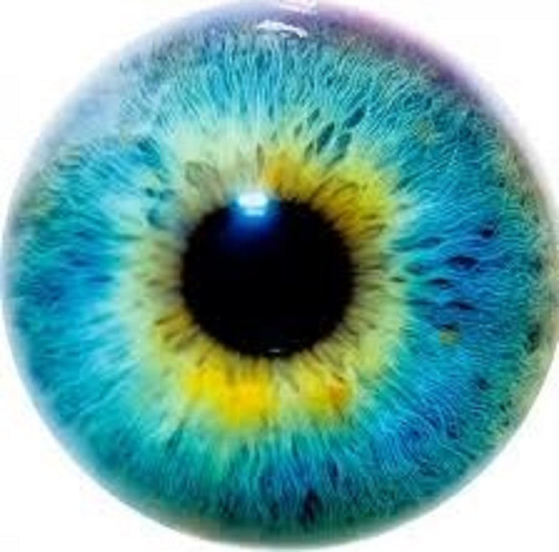 The Intellectual Human Eye