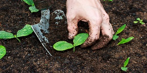 Innovative Advancement in Soil Science and Plant Physiology