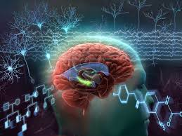 Neurological Education and the Representation of Knowledge in Art
