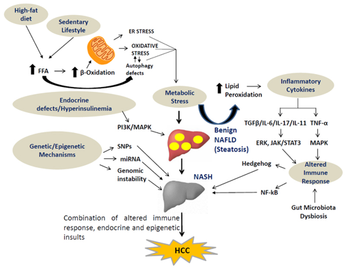 Mechanisms that Associate Extension of Nonalcoholic Fatty Liver Diseases (NAFLD) to NASH (Nonalcoholic Steatohepatitis) and Further Progressing to Cirrhosis and Hepatocellular Carcinoma(HCC) in Addition to Few Proposed Biomarkers for Poor Prognosis