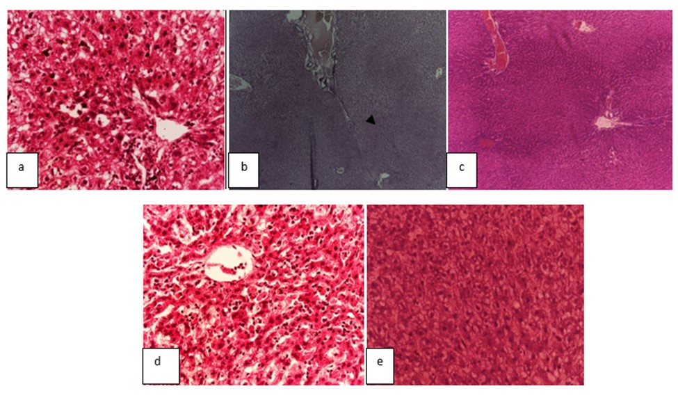 Annona muricata (L.): Investigating the Ameliorative Effect of Leaves Extract on Liver and Kidney Function in Carbon Tetrachloride (CCl4) Induced Rats