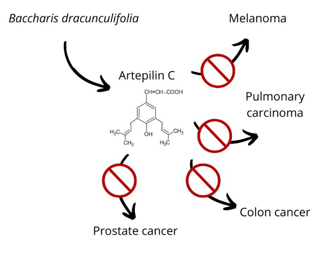 Does Artepillin C Have A Putative Role In Defense Against Cancer?