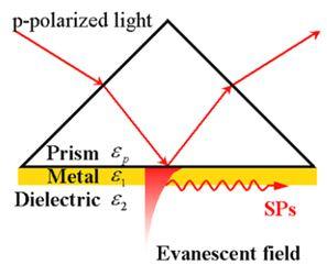 Surface Plasmon Photodetectors Based on Noble Metals