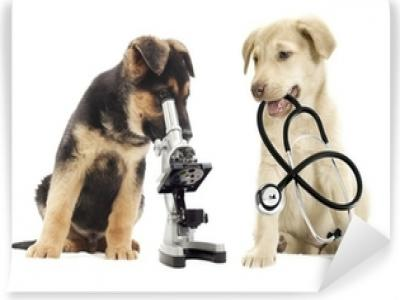International Journal of Veterinary Science and Medical Diagnosis