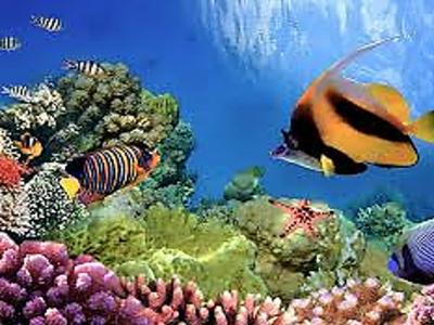 Journal of Marine Biology and Environmental Sciences
